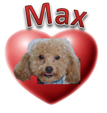 Cockapoo Breeder Puppies For Sale Dogs For Sale Atlanta Ga